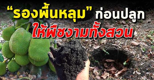 ขี้เถ้าแกลบผสมเศษถ่าน รองพื้นหลุม ให้พืชงามยกสวน