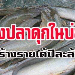 สูตรสำเร็จเลี้ยงปลาดุกในบ่อดิน…สร้างรายได้ปีละล้าน!!